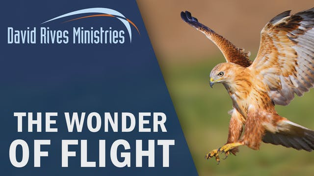 The Wonder of Flight - Prof. Andy McI...