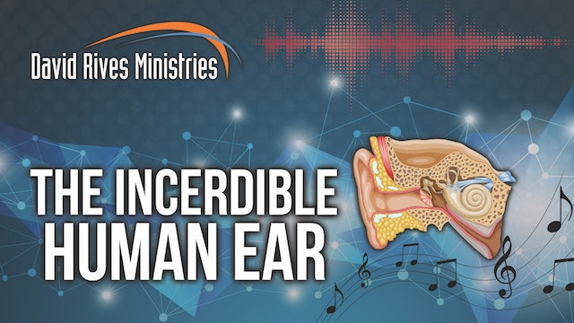 Ep.6 Study Guide - The Incredible Human Ear