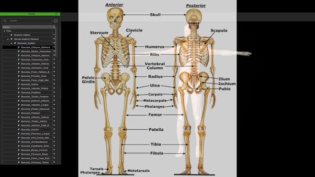 Gravity Body Structural Academy Anatomy Series Part 1