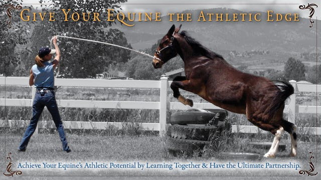 Give Your Equine the Athletic Edge