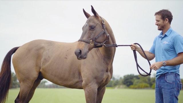 Pony Profile - Tomas Garcia del Rio - Marino