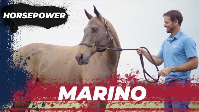 Marino  - Tomas Garcia del Rio