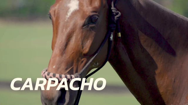 Carpacho - Peke Gonzalez
