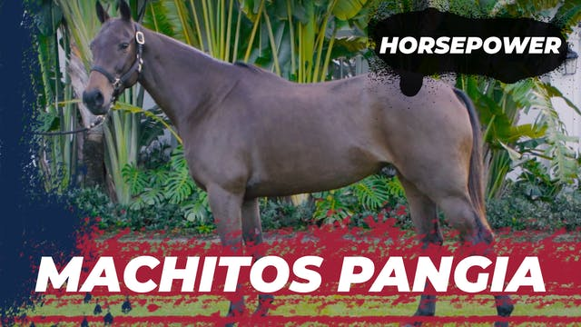 Machitos Pangia - Polito Pieres