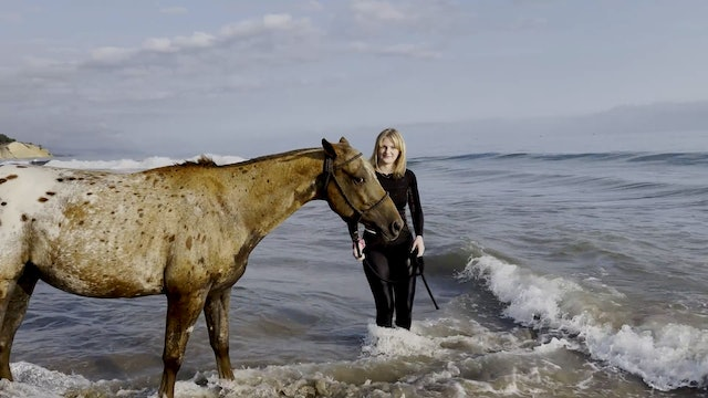 swimming with the horses Reel