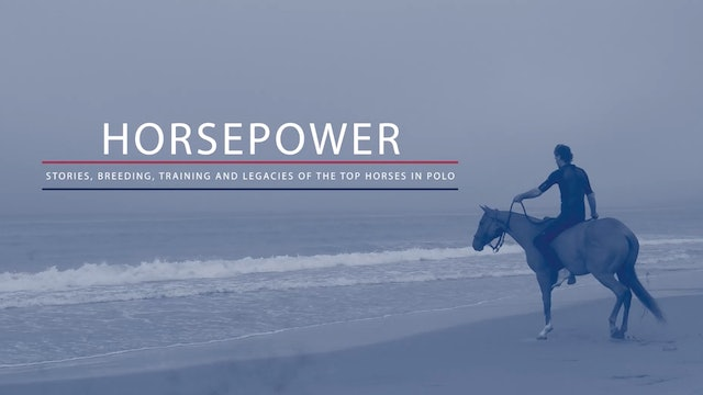 Horsepower - Swimming with Horses