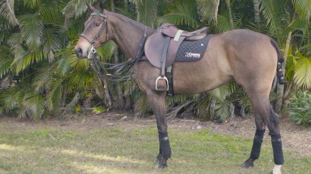 Horse Profile - Pipe Márquez