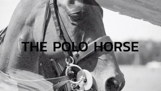Matt Coppola - The Polo Horse