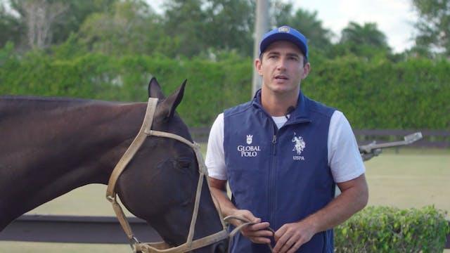 Horses - Matt Coppola