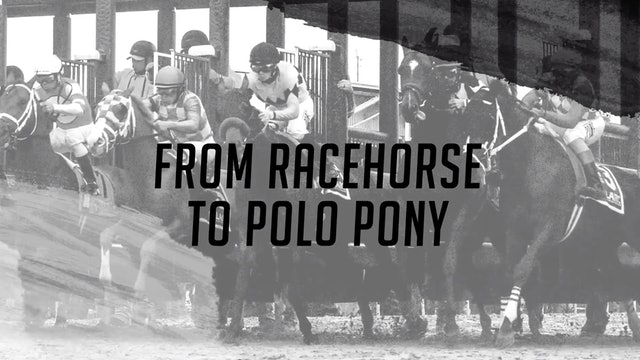 From Racehorses to Polo Pony