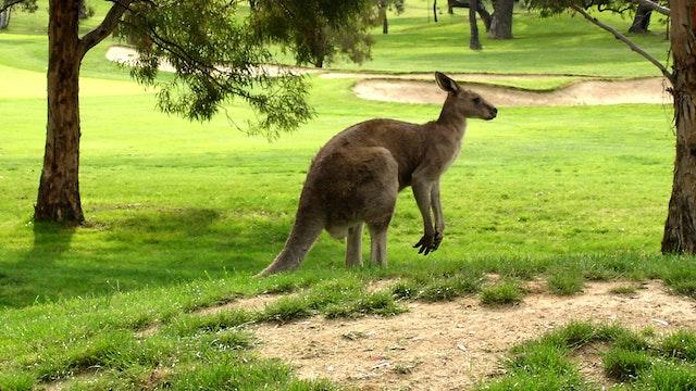 Adventure Golf Australia