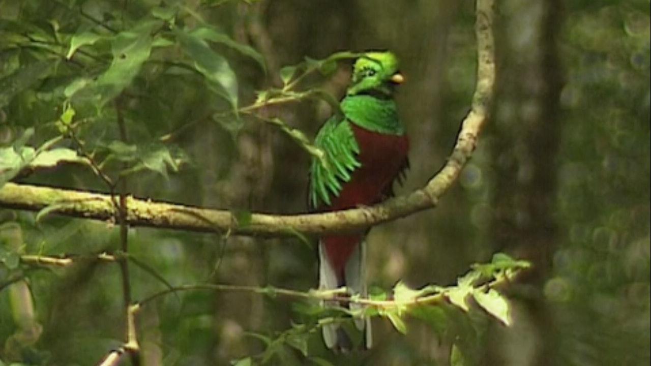 Globe Trekker - Costa Rica & Nicaragua
