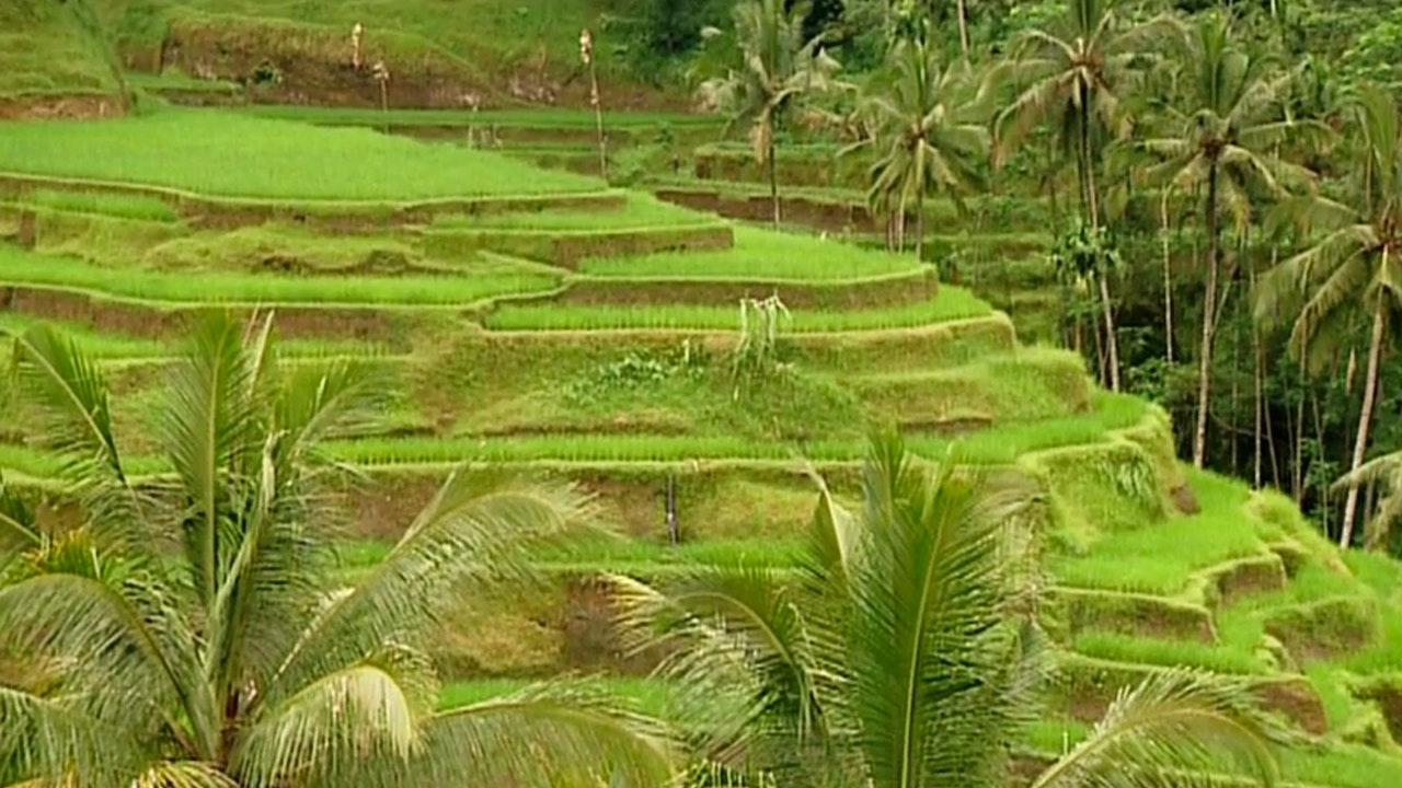 Metropolis - Bali