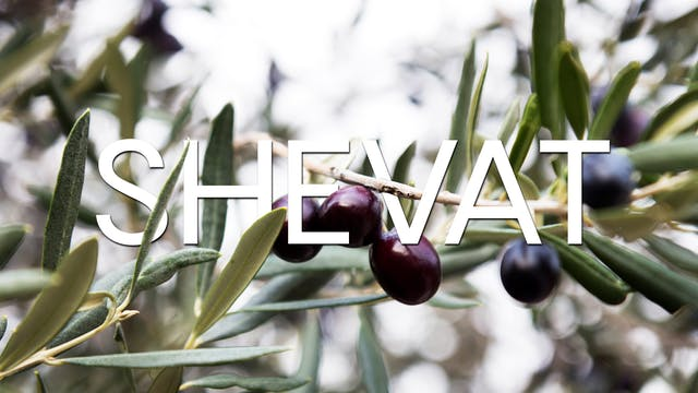 Firstfruits-  Shevat 5779 - January 6...