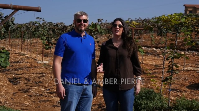 The Vineyards of Northern Israel