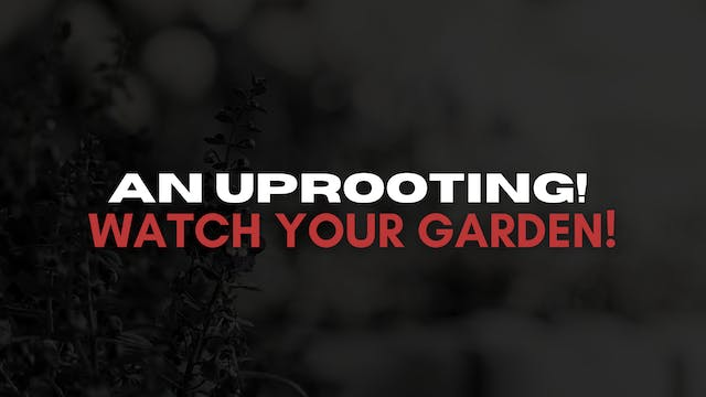 An Uprooting! Watch Your Garden! (04/23)