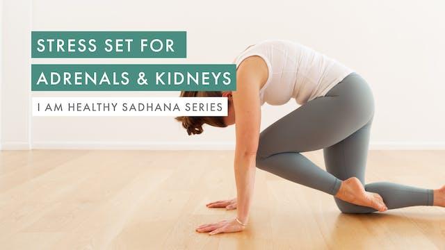 Stress Set for Adrenals & Kidneys