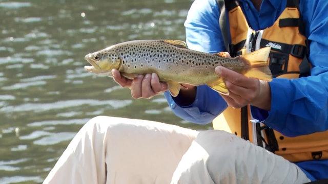 Road Trip 2013: Gaston, AR - White River Trout