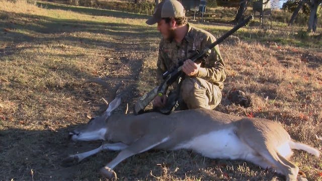 Texas Whitetails Close Up