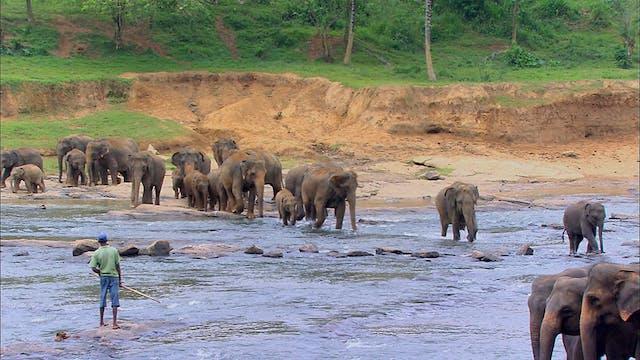 Sri Lanka - The Emerald Isle