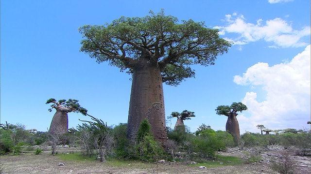 Madagascar - A Multifaceted Land