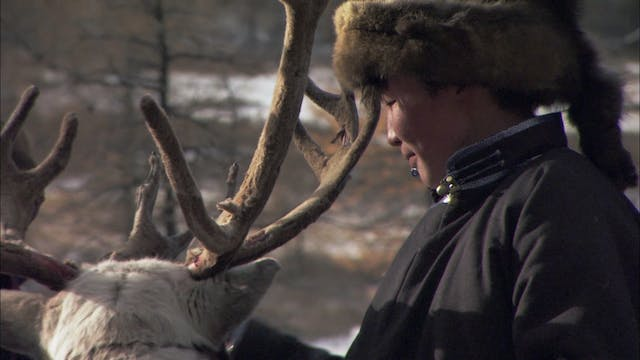 Tracking the White Reindeer