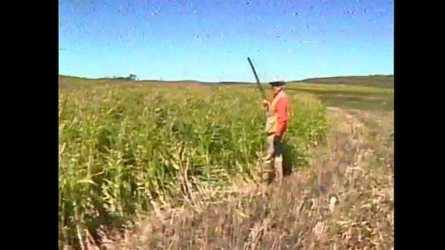 Grits Gresham On Pheasant Hunting