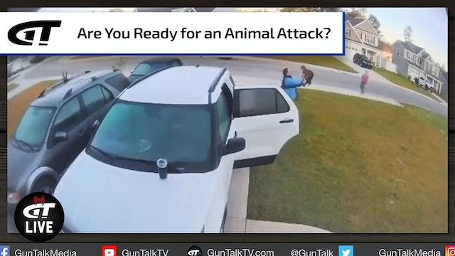 When Bobcats Attack