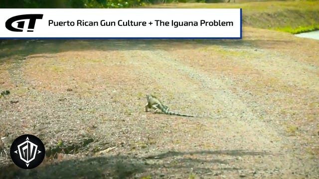 Iguana Go To Puerto Rico: P3