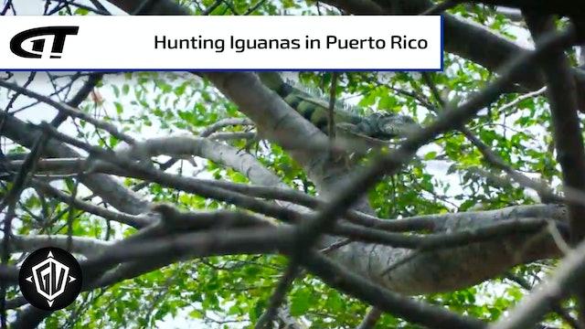 Iguana Go To Puerto Rico: P2