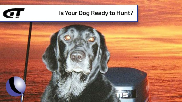 Is Your Dog Ready to Hunt?