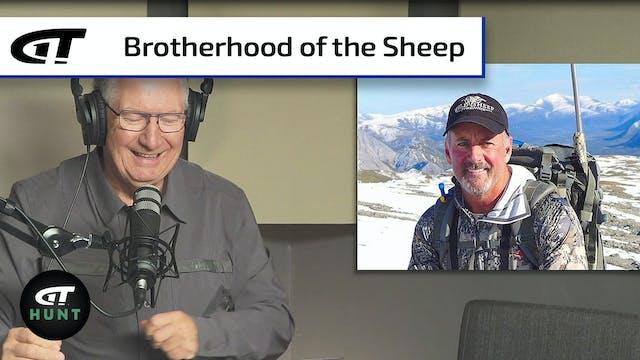 Wild Sheep Stories