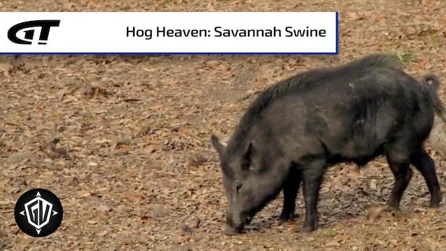 Savannah Swine - Full Episode