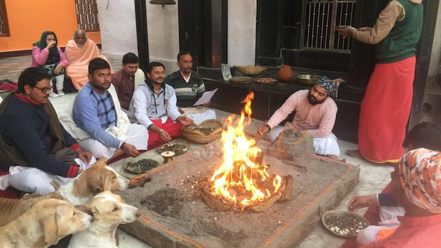 Uninvited Stray Dogs Join Fire Ceremony