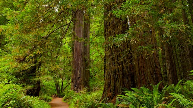 Redwood Coast California with Music by Steven Halpern