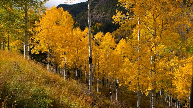 Fall Colors Colorado with Music by Steven Halpern