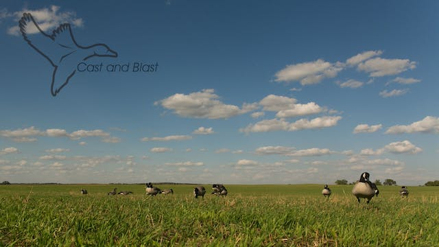 "HEARTLAND WATERFOWL | 5.1 | ""Cast & Blast"""