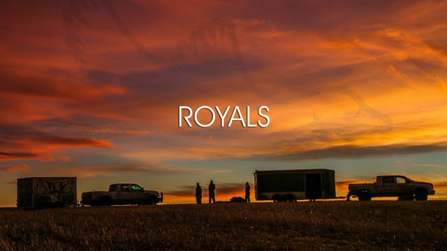"Heartland Waterfowl 3.4 - ""Royals"""