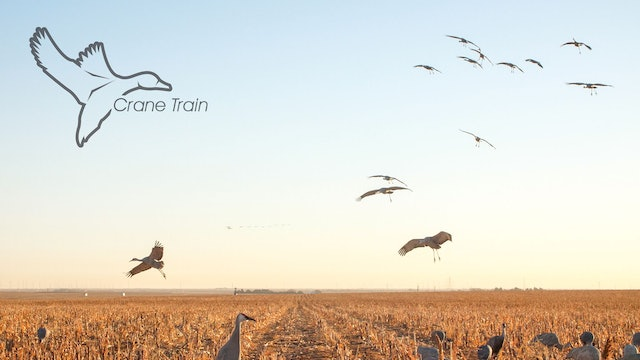 "HEARTLAND WATERFOWL | 5.9 | ""Crane Train"""
