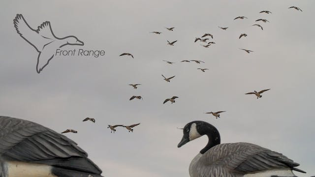 "HEARTLAND WATERFOWL | 5.6 | ""Front Range"""