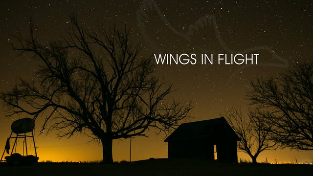 "Heartland Waterfowl 3.10 - ""Wings In Flight"""