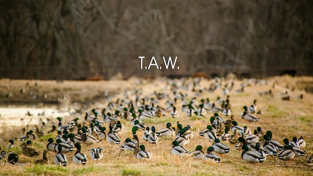 "Heartland Waterfowl 3.6 - ""T.A.W."""