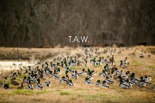 """Heartland Waterfowl 3.6 - """"T.A.W."""""""