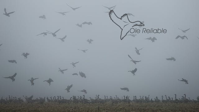 "Heartland Waterfowl 4.13 - ""OLE RELIA..."