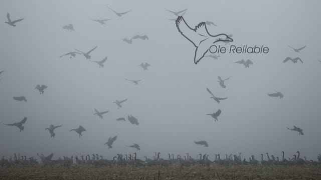 "Heartland Waterfowl 4.13 - ""OLE RELIABLE"""