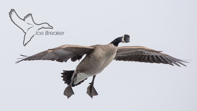 "HEARTLAND WATERFOWL | 5.10 | ""Ice Breaker"""
