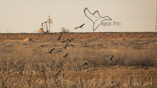 "Heartland Waterfowl 4.9 - ""TEJAS TRIO"""