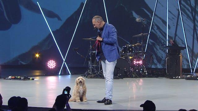 Live Dogs & Dead Lions - Brian Houston