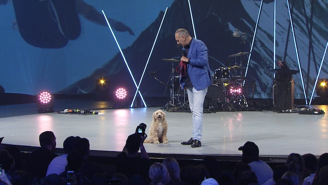 Live Dogs & Dead Lions - Brian Houston