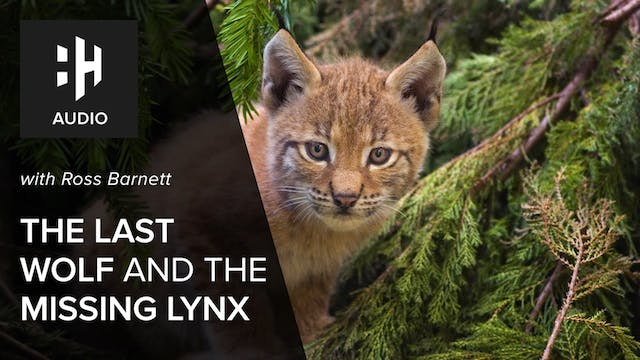 🎧 The Last Wolf and the Missing Lynx ...